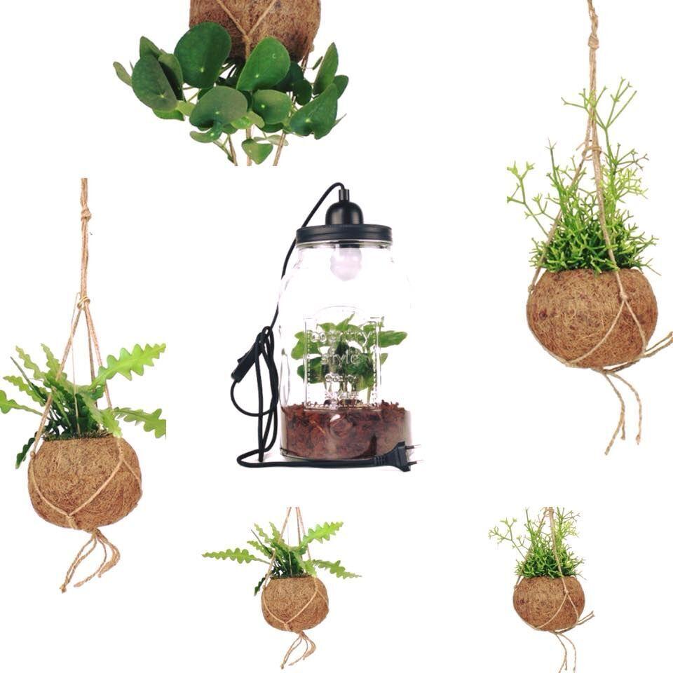 piante-in-vaso-regalo
