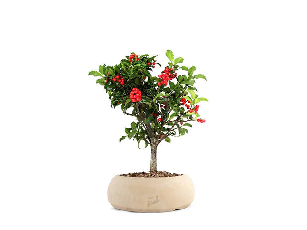 regalo-floreale-agli-sposi-online