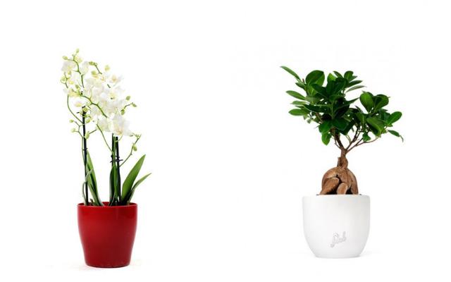 spedire-piante-agli-sposi-online